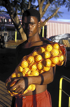 Packing oranges, south africa. Northern province. A young man stood with a bag of oranges