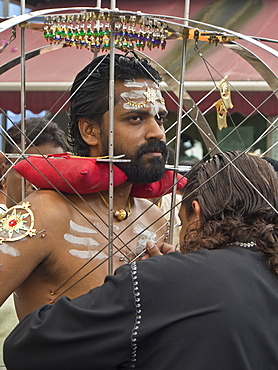 Devotee with body pierced with skewers, Thaipusam Hindu Tamil festival celebrated in Little India, Singapore, Southeast Asia, Asia
