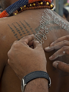 Hooks being attached to a devotee's back, Thaipusam Hindu Tamil festival celebrated in Little India, Singapore, Southeast Asia, Asia