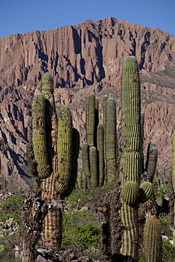 Arid landscape with cactii and desert rock formations near Humahuaca in Jujuy province in the Andes region of Argentina, South America