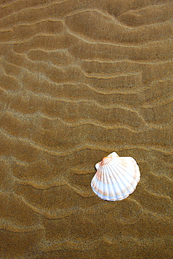 shell on sandy beach, Sutherland, Scotland