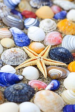 sea star and shells, Sutherland, Scotland