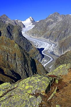 Swiss alps, fiescher glacier, oberaarhorn, 3637 m, fiesch, goms, oberwallis, wallis, switzerland