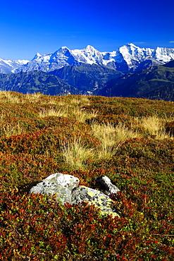 Schweizer Alpen, Aussicht vom Niederhorn, Finsteraarhorn, 4274 m, Eiger, 3974 m, Moench, 4099 m, Jungfrau, 4158m, Herbst, Berner Oberland, Bern, Schweiz