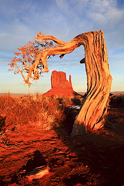 Monument valley, west mitten butte with old tree, utah, usa