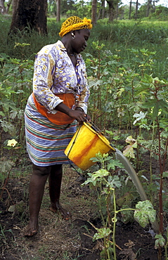 Gambia, a woman of kabekel village watering plants