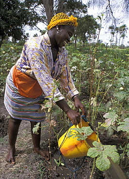 Gambia, a woman of kabekel village