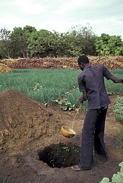 Man watering vegetable garden a small, segou.