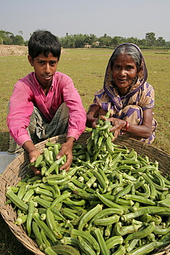 Bangladesh ajizul hoque and his grandmother shahera khatun with their harvest of okra, or ladies fingers kumargati village, mymensingh region