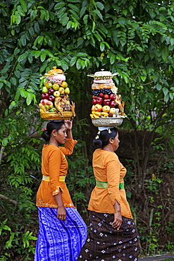 Indonesia women carrying food offerings to temple. Hindu ceremony near klungkung on full moon. Bali