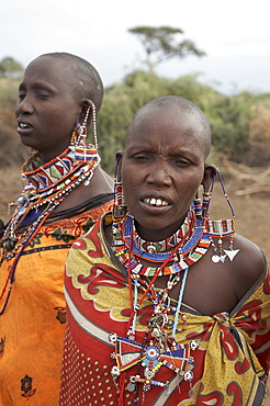 Kenya. Masai women getting ready to dance at their masai village within the amboseli national park