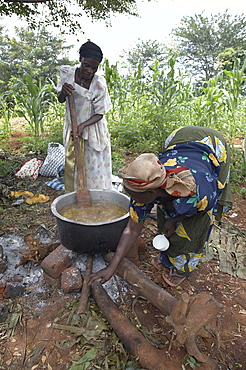 Uganda cooking matoke, steamed bananas, the staple diet, on a large open fire for a feast day. kangulumira, kayunga district