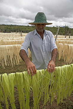 Brazil photo relates to the work of apaeb (association of small farmers of the state of bahia) who help improve the local economy and culture of valente, bahia, in the dry northeastern sertao region of brazil. sisal is the main crop grown in the semi-arid climate, and is seen drying on the farm of jose elias lima lopes