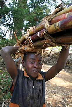 Burundi boy ccarrying sugar cane, gitera.