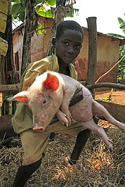 Burundi boy with pig, gitera.