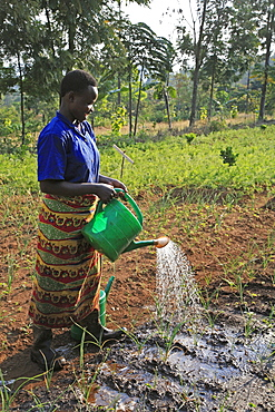 Burundi agakura, a youth agricultural project in gitera. Watering seedlings .
