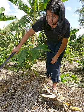 BOLIVIA ECOTOPS projects in Alto Beni. Sandra Gonzales clearing weeds from the family plot, where many crops including cacao, bananas, beans, vegetables and coca are growing