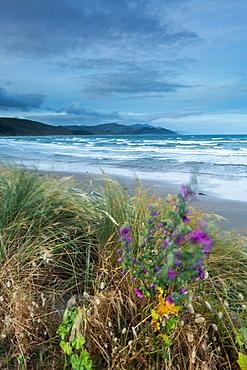 Castlepoint, Wellington Region, North Island, New Zealand, Pacific
