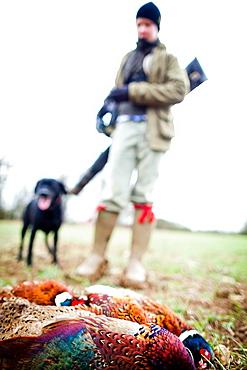 Pheasant and gun and gun dog, Oxfordshire, England, United Kingdom, Europe