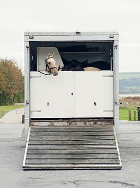 Horse peers out of a horsebox, United Kingdom, Europe