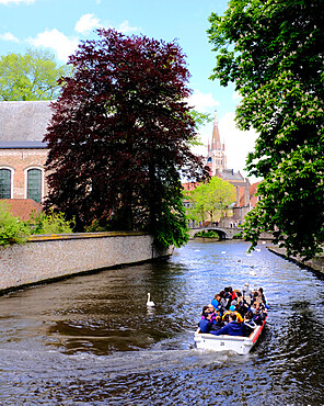 Tourist boat in the canals of Bruges with the Church of our Lady in the background, Bruges, Belgium, Europe
