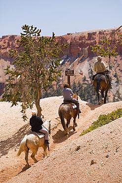 Horseback riding through Bryce Canyon National Park, Utah, United States of America, North America