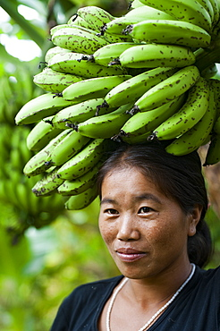 A woman collects bananas and balances them on her head to carry, near Manipur, India, Asia
