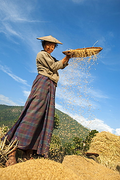 A woman uses the traditional method of sorting rice called winnowing near Mongar in east Bhutan, Asia