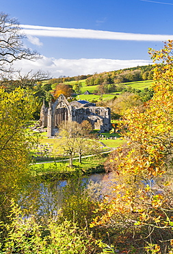 Bolton Abbey and the River Wharfe, in Lower Wharfedale, The Yorkshire Dales National Park, Enhland, United Kingdom, Europe