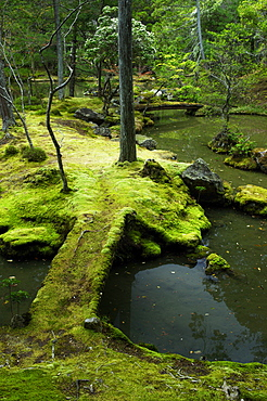 Moss-covered bridge in the garden of Saiho-ji temple, UNESCO World Heritage Site, Kyoto, Japan, Asia