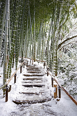 Snowy path in bamboo forest, Kodai-ji temple, Kyoto, Japan, Asia