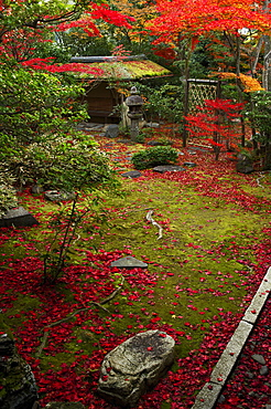 Japanese garden in autumn, Daiho-in temple, Kyoto, Japan, Asia