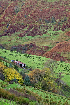 Glenballyemon, County Antrim, Ulster, Northern Ireland, United Kingdom, Europe