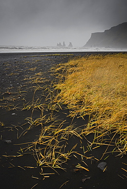 Basalt rock formations (sea stacks) and black sand beach in Vik, Iceland, Polar Regions