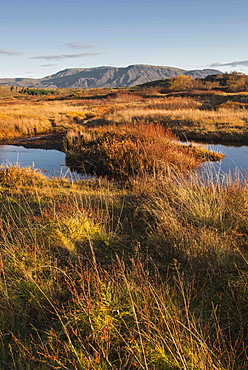 Autumn color with mountains in Thingvellir National Park, UNESCO World Heritage Site, Iceland, Polar Regions