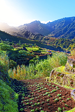 Elevated view of farmland, hills and mountains at Lameiros, near Sao Vicente, Madeira, Portugal, Atlantic, Europe  - 1246-36