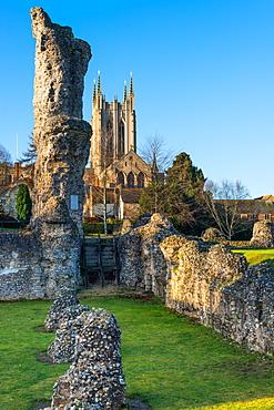 Ruins of the Abbey of Bury St. Edmunds, historic Benedictine monastery, with St. Edmundsbury Cathedral, Bury St. Edmunds, Suffolk, England, United Kingdom, Europe