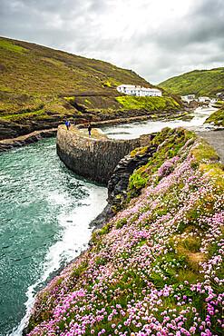 Flowers at Boscastle Harbour in Springtime, Atlantic coast, Cornwall, England, UK.