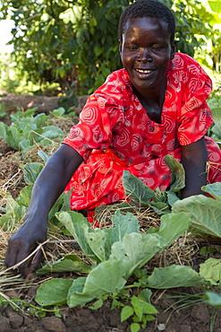 A female farmer checks on her cabbages, Uganda, Africa