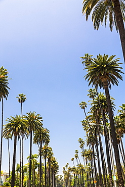 Beverly Drive, Beverly Hills, California, United States of America, North America