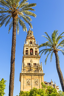 The bell tower of the Mosque-Cathedral (Great Mosque of Cordoba) (Mezquita), UNESCO World Heritage Site, seen from the inner courtyard, Cordoba, Andalusia, Spain, Europe