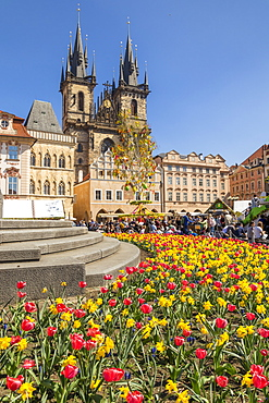 Staromestske namesti (Old Town Square) and Our Lady before Tyn Church in spring, UNESCO World Heritage Site, Prague, Bohemia, Czech Republic, Europe