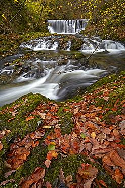 Autumn at Stock Ghyll, Ambleside, Lake District National Park, UNESCO World Heritage Site, Cumbria, England, United Kingdom, Europe