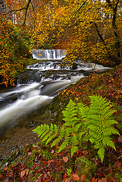 Autumn in Stock Ghyll near Ambleside, Lake District National Park, UNESCO World Heritage Site, Cumbria, England, United Kingdom, Europe