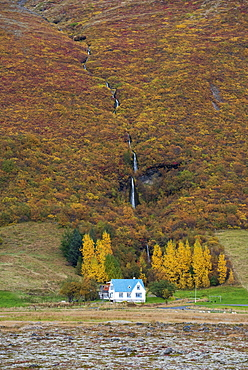 Icelandic house in autumn set in the Skaftafell National Park, South of Iceland, Iceland, Polar Regions