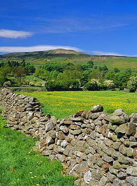 Dry stone wall, Swaledale, North Yorkshire, England, UK, Europe