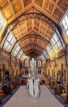 Interior, Natural History Museum, London, England, United Kingdom, Europe