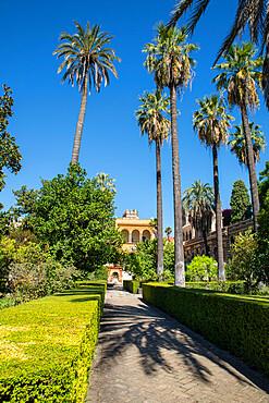 Real Alcazar of Seville, UNESCO World Heritage Site, Seville, Andalucia, Spain, Europe