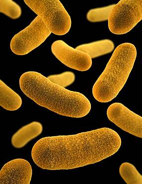 Yersinia enterocolitica Bacteria, 3D Model