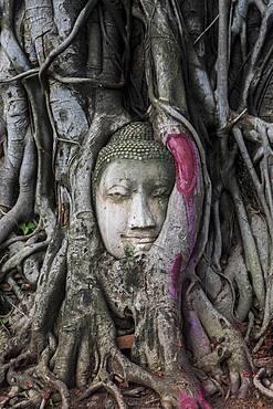 Buddha head in banyan tree roots at Wat Mahathat temple, in Ayutthaya, Thailand